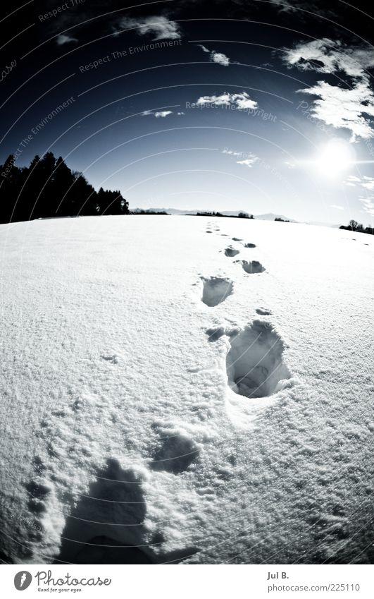 Schneeweg Natur Schönes Wetter blau weiß Zukunft Sonne Leuchtkraft Fußspur Schneespur Schneedecke Wintertag Wintersonne Menschenleer Fährte Weitwinkel