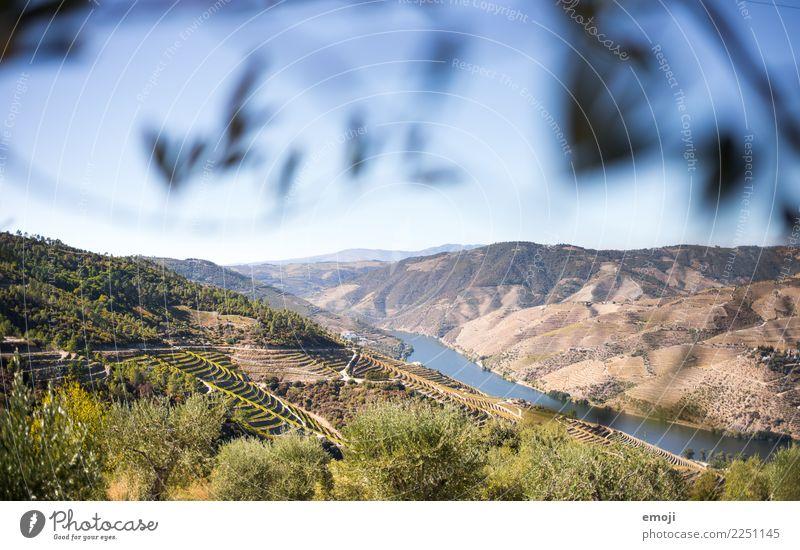 Dourotal Natur Sommer grün Landschaft Wärme Umwelt Schönes Wetter Fluss Hügel Sommerurlaub Tal Portugal Weinbau Weingut