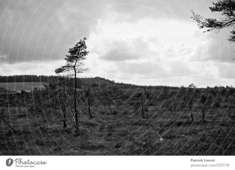 Schwarzes Moor (II) Umwelt Natur Landschaft Pflanze Luft Himmel Wolken Herbst Wetter Wind Baum Wildpflanze Hügel Sumpf dunkel trist Stimmung Einsamkeit