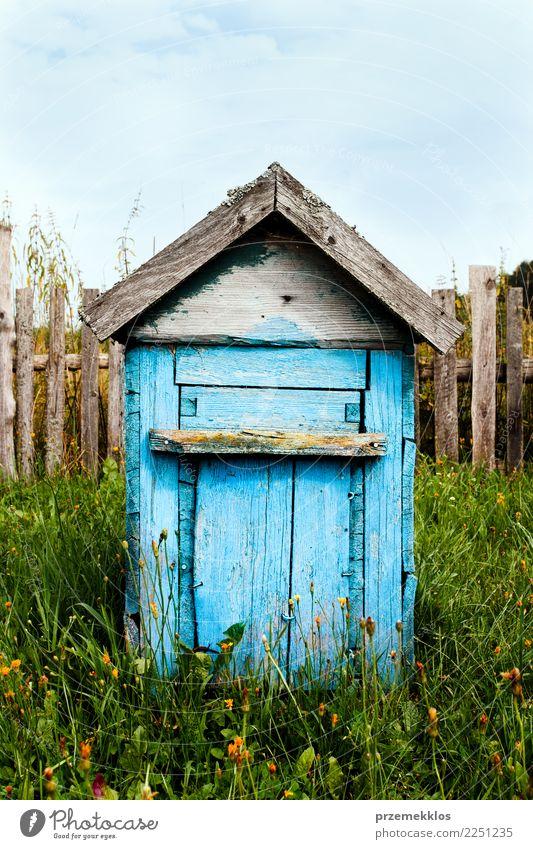Alter hölzerner Bienenstock gemalt in der blauen Stellung in der Landschaft Garten Gras Dorf Holz Bauernhof Liebling Single Farbfoto Außenaufnahme Menschenleer
