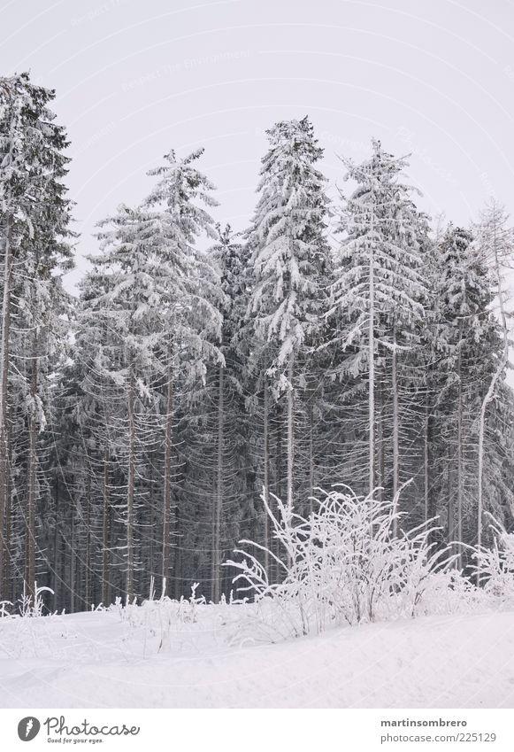 Vereister Wald Natur Landschaft Winter Eis Frost Schnee Wasser ruhig kalt stagnierend Farbfoto Außenaufnahme Menschenleer Textfreiraum oben Textfreiraum unten