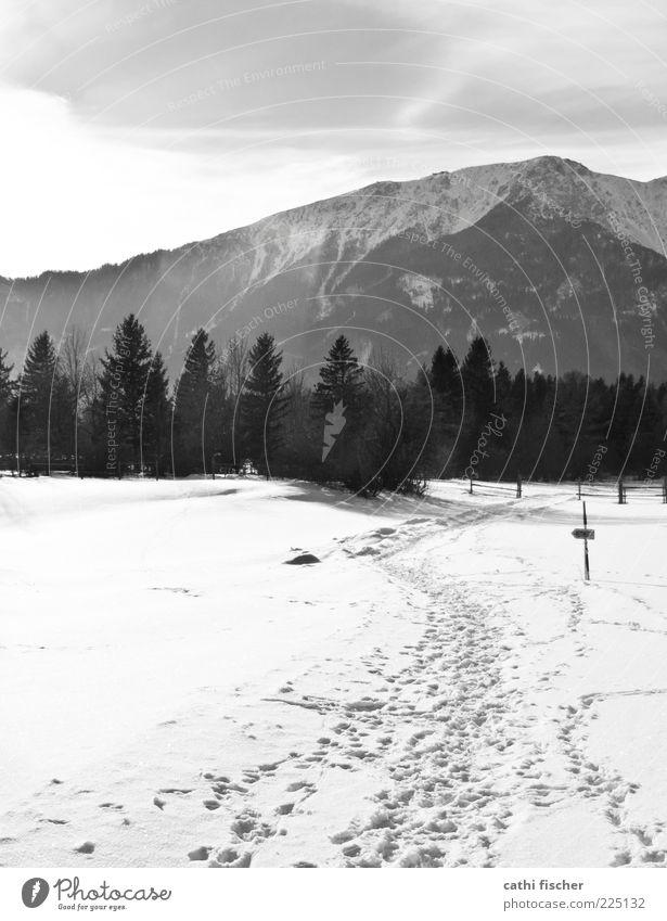 Schneeberg Himmel Natur weiß Baum Wolken ruhig Winter schwarz kalt Berge u. Gebirge Landschaft Umwelt Wetter Eis Schilder & Markierungen