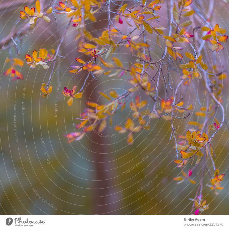 Frühlingserwachen elegant Wellness Leben harmonisch Wohlgefühl Zufriedenheit Erholung ruhig Dekoration & Verzierung Tapete Ostern Natur Pflanze Baum Blatt Ast
