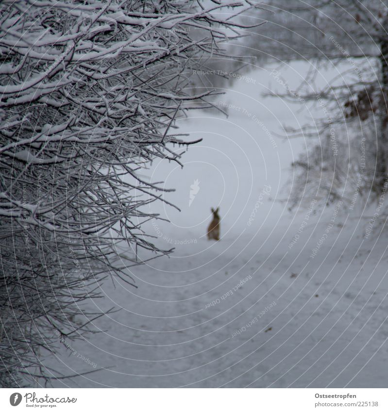 alter Hase Natur weiß Pflanze Winter schwarz Tier Schnee Wege & Pfade braun warten sitzen Sträucher authentisch Wildtier niedlich beobachten