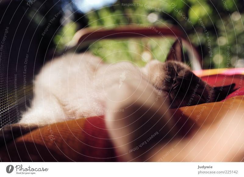 LAZY harmonisch Wohlgefühl Erholung ruhig Sommer Schönes Wetter Tier Haustier Katze Fell Stuhl Kissen genießen schlafen mehrfarbig grün rot Zufriedenheit