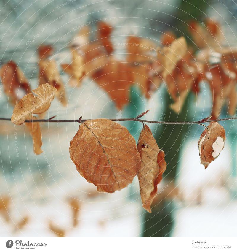 Vergänglichkeit Winter Umwelt Natur Herbst Schnee Baum Blatt alt kalt blau braun Wandel & Veränderung Zeit Farbfoto Außenaufnahme Menschenleer Textfreiraum oben
