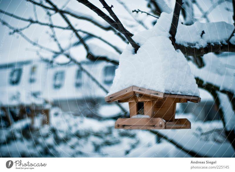 Absturzgefahr Winter Umwelt Natur Eis Frost Schnee Baum Ast Garten Futterhäuschen Holz außergewöhnlich kalt Wetter Farbfoto Außenaufnahme Detailaufnahme