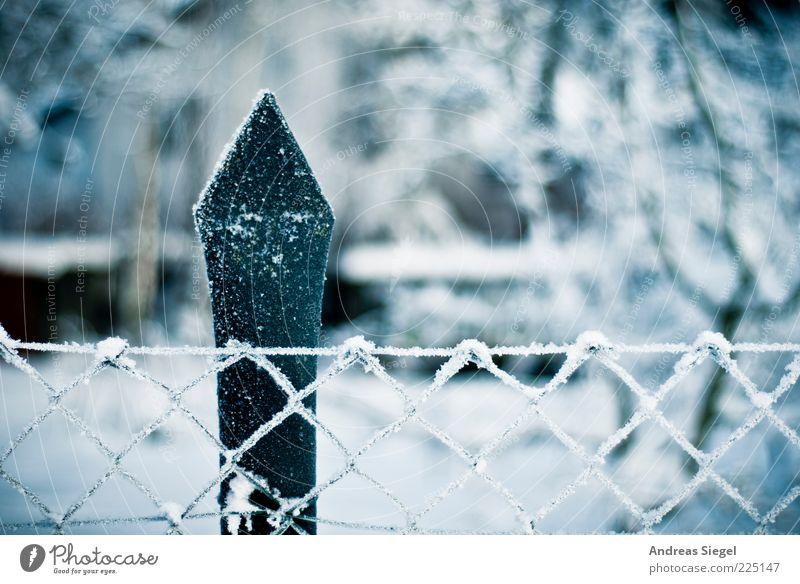 Weis(s)zeit Umwelt Natur Landschaft Winter Eis Frost Schnee Garten Zaun Zaunpfahl Maschendrahtzaun authentisch kalt Spitze weiß ästhetisch Klima Raureif