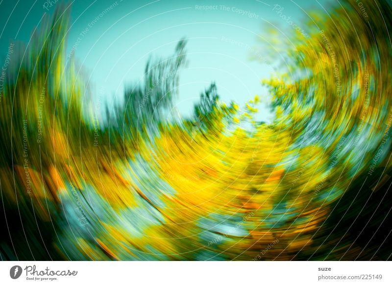 Kreislauf Natur Baum Blatt Bewegung Herbst Kunst Design verrückt rund Todesangst Höhenangst Zukunftsangst Baumkrone Sturm Irritation Stress