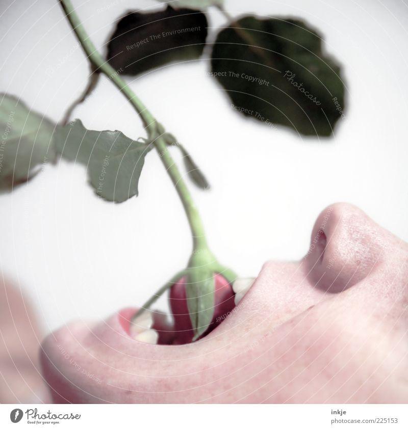 von Luft und Liebe wird man nicht satt Mensch Pflanze Essen Mund Nase wild verrückt außergewöhnlich kaputt Lifestyle Coolness Wandel & Veränderung Rose Zähne
