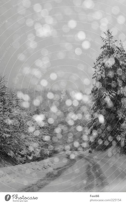 mehr als 30 Flocken Winter Schnee Himmel Unwetter Sturm Baum Wald Menschenleer Verkehrswege Straße Wege & Pfade dunkel schön schwarz weiß ruhig Umwelt