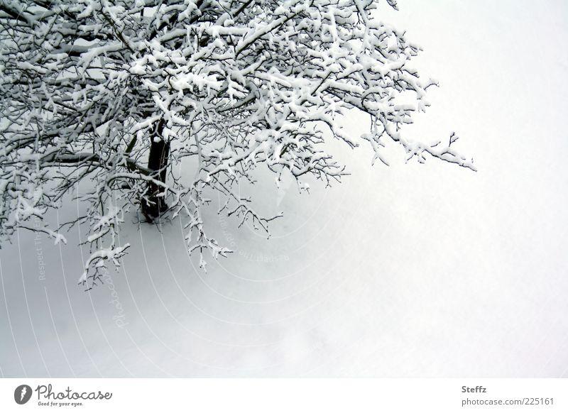 Winterstille Natur weiß Baum Einsamkeit ruhig kalt Umwelt Schnee grau Textfreiraum Klima Ast Dezember unberührt Zen