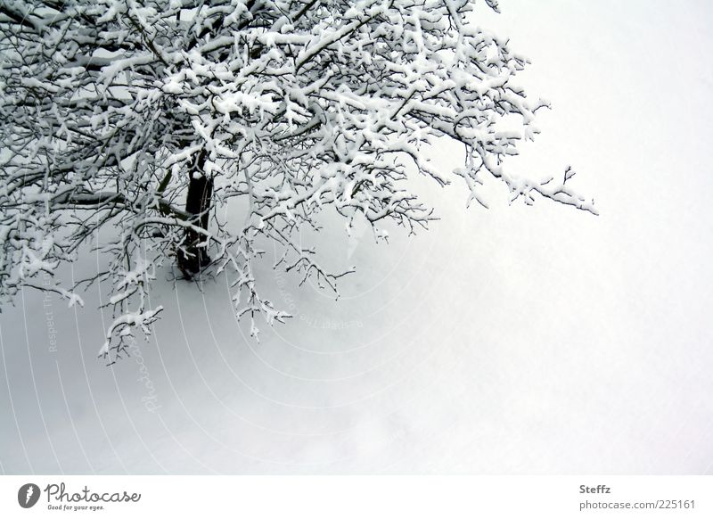 Winterstille Umwelt Natur Schnee Baum Schneedecke kalt grau weiß ruhig Einsamkeit Winterstimmung Stimmungsbild Klima Wintertag unberührt Ast Januar Februar