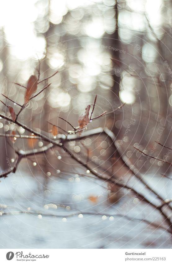 Wintersonne Umwelt Natur Landschaft Schnee Wald braun Ast Zweig Wassertropfen Winterwald Farbfoto Gedeckte Farben Außenaufnahme Licht Reflexion & Spiegelung