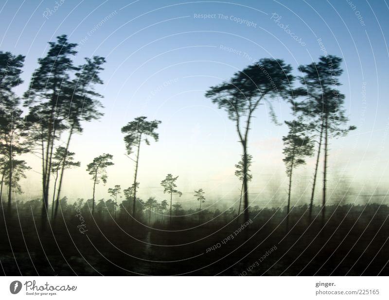 Deutsche Savanne Umwelt Natur Landschaft Pflanze Himmel Winter Klima Klimawandel Wetter Schönes Wetter Baum Sträucher Wildpflanze Wald dehydrieren Wachstum