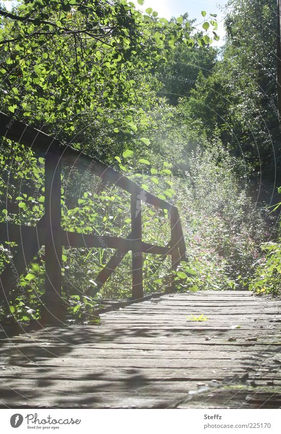 auf allen unseren Wegen Natur Sonnenlicht Sommer Schönes Wetter Pflanze Lichterscheinung Brücke Übergang hell natürlich grün Stimmung Romantik schön