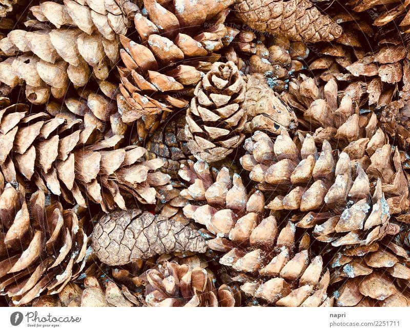 zapfig Natur Winter Wald Herbst Hintergrundbild natürlich braun Dekoration & Verzierung Sammlung nachhaltig Anhäufung ökologisch Tannenzapfen