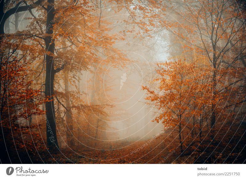 en automne Natur Landschaft Pflanze Urelemente Herbst schlechtes Wetter Nebel Baum Gras Sträucher Wald dunkel kalt Einsamkeit einzigartig Idylle Jahreszeiten