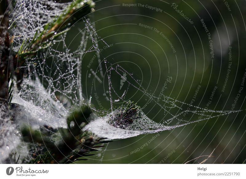 !Trash! 2017 | Spinnerei Umwelt Natur Pflanze Wassertropfen Herbst Baum Nadelbaum Fichte Zweig Wald Spinnennetz hängen außergewöhnlich einzigartig nass