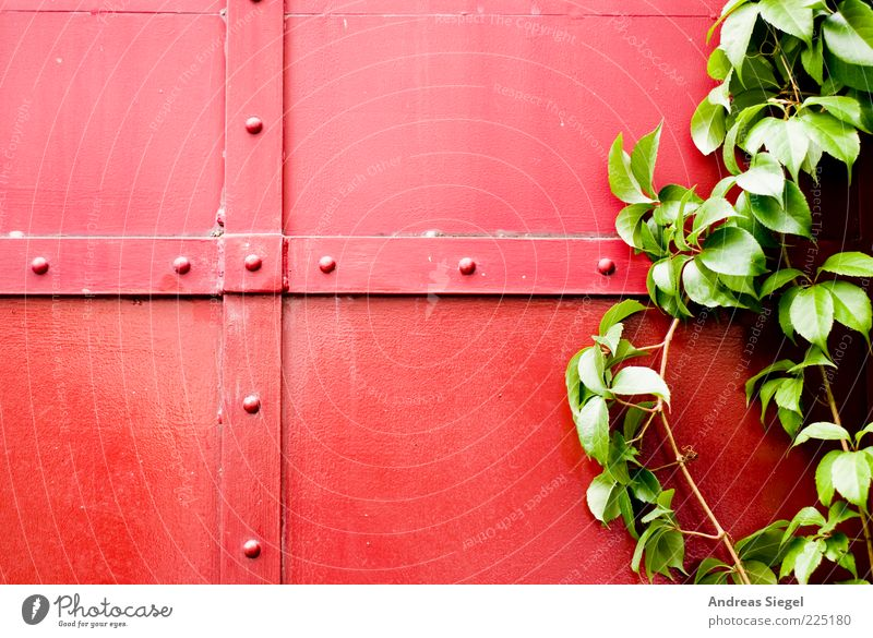 Rot-Grün Natur grün Pflanze rot Blatt Farbe Gebäude Linie Metall natürlich Sträucher Tor Kreuz Gegenteil Bildausschnitt Strebe