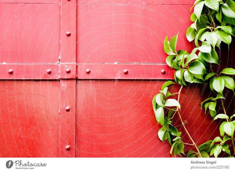 Rot-Grün Natur Pflanze Sträucher Blatt Grünpflanze Gebäude Tor Niete Strebe Metall Linie natürlich grün rot Farbe Kontrast Kreuz Farbfoto Außenaufnahme