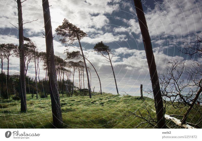 Strandgehölz Umwelt Natur Landschaft Himmel Wolken Horizont Schönes Wetter Wind Sturm Baum Gras Windflüchter Ostsee Weststrand Holz leuchten schaukeln wild