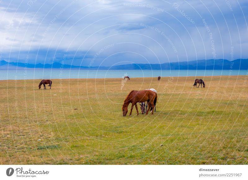 Pferde um Lied Kul See, Kirgisistan schön Ferien & Urlaub & Reisen Tourismus Sommer Berge u. Gebirge Natur Landschaft Himmel Wolken Nebel Gras Park Wiese Hügel