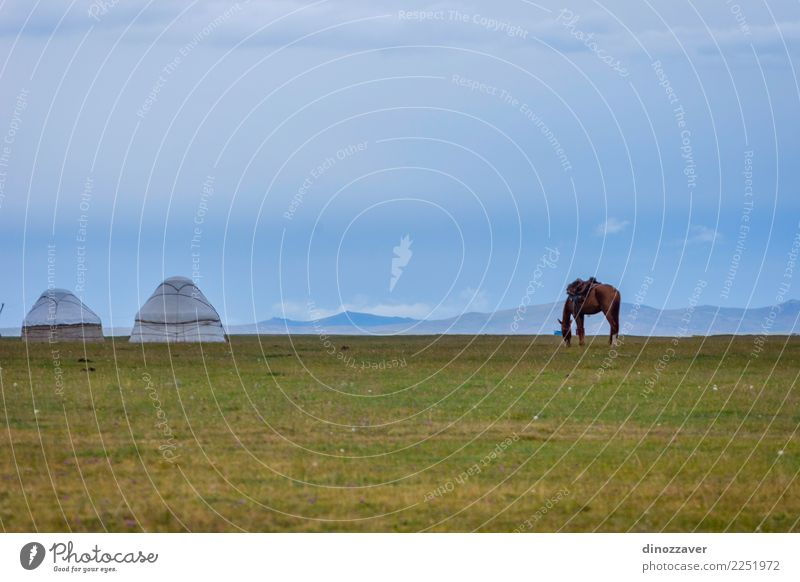 Pferd auf einer Weide mit Jurten, Kirgisistan Himmel Natur Ferien & Urlaub & Reisen blau Sommer schön grün Landschaft Tier Wolken Berge u. Gebirge Wiese