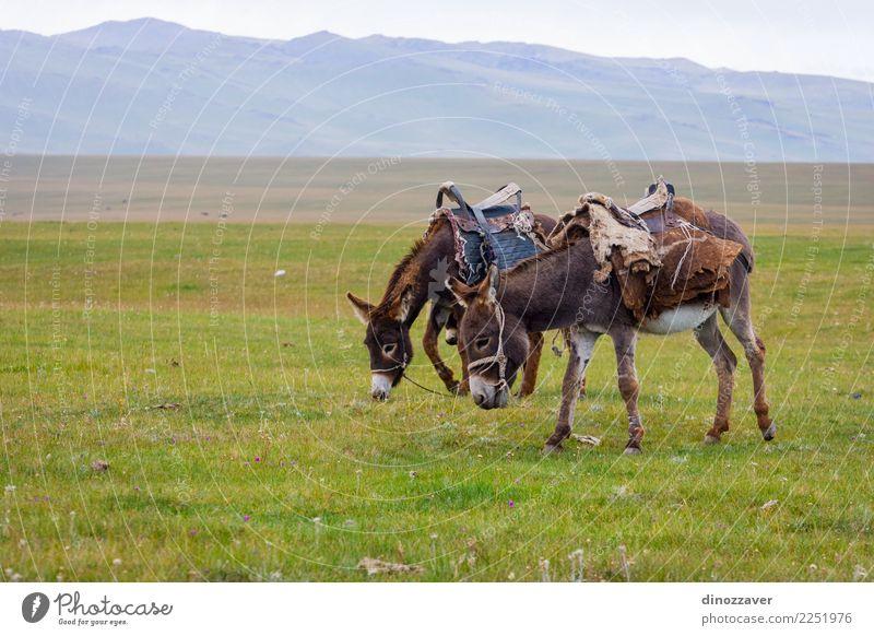 Zwei Esel auf einer Weide Himmel Natur Ferien & Urlaub & Reisen grün Landschaft Tier Freude Berge u. Gebirge Gesicht lustig Wiese Gras grau braun Aussicht Baby