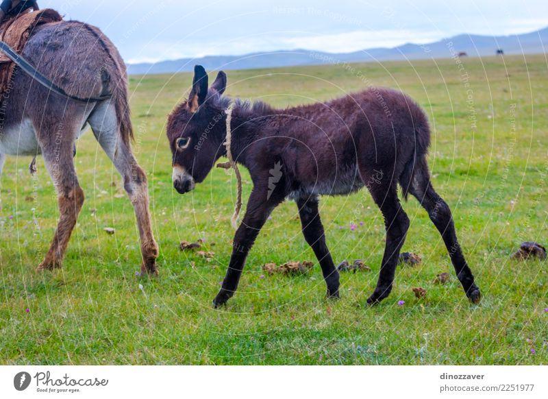 Baby Esel nach Mama Esel Himmel Natur Ferien & Urlaub & Reisen grün Landschaft Tier Freude Berge u. Gebirge Gesicht Tierjunges lustig Wiese Gras grau braun