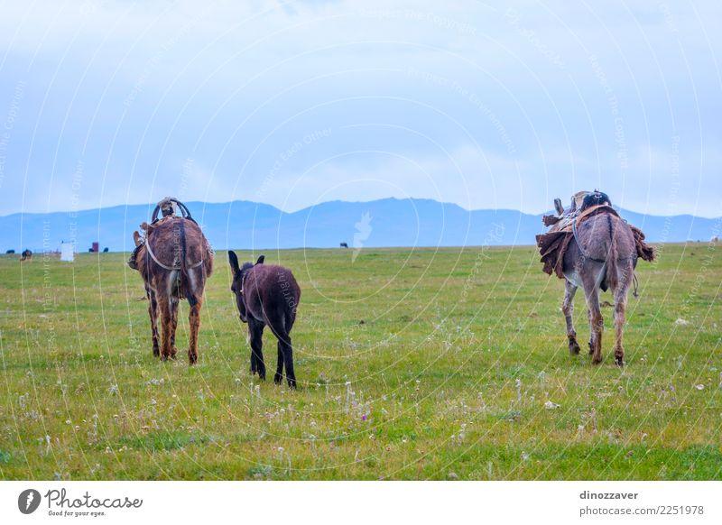 Eselfamilie auf einer Weide Himmel Natur Ferien & Urlaub & Reisen grün Landschaft Tier Freude Berge u. Gebirge Gesicht Tierjunges lustig Wiese Gras grau braun