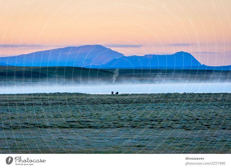 Song Kul See im Sonnenaufgang, Kirgisistan schön Ferien & Urlaub & Reisen Tourismus Sommer Berge u. Gebirge Natur Landschaft Tier Himmel Wolken Nebel Gras Park