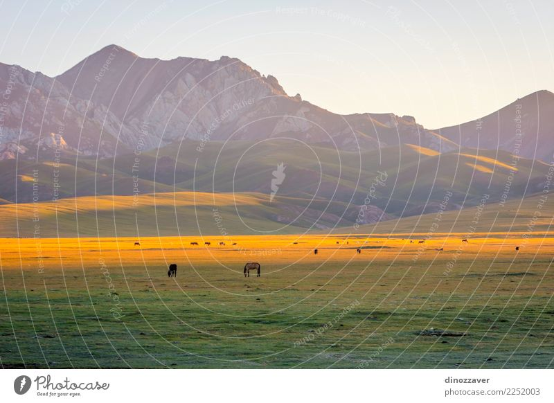 Berge und Pferde von Song Kul, Kirgisistan schön Ferien & Urlaub & Reisen Sommer Sonne Schnee Berge u. Gebirge Natur Landschaft Tier Himmel Wolken Nebel Gras