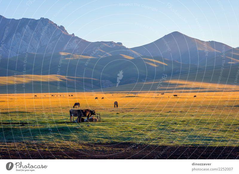 Berge und Rinder von Song Kul, Kirgisistan schön Ferien & Urlaub & Reisen Sommer Sonne Schnee Berge u. Gebirge Natur Landschaft Tier Wolken Nebel Gras Park