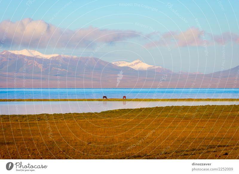 Song Kul See mit Pferden und Bergen schön Ferien & Urlaub & Reisen Sommer Sonne Schnee Berge u. Gebirge Natur Landschaft Tier Wolken Nebel Gras Park Wiese Hügel