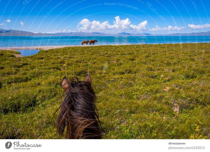 Pferderitt, First-Person-Ansicht Lifestyle Freizeit & Hobby Ferien & Urlaub & Reisen Sommer Berge u. Gebirge Sport Natur Landschaft Tier Gras Park Wiese See