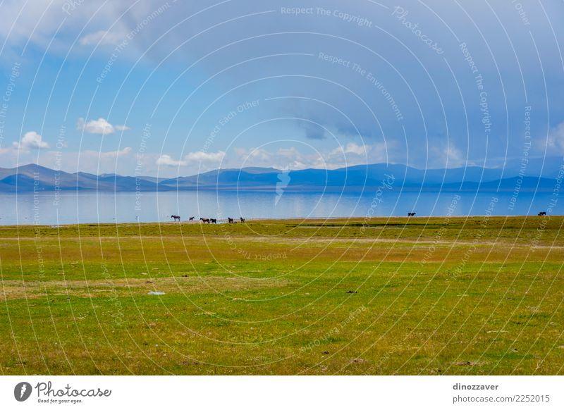 Pferde am Song Kul See schön Ferien & Urlaub & Reisen Sommer Sonne Berge u. Gebirge Natur Landschaft Tier Wolken Nebel Gras Park Wiese Hügel Felsen Herde