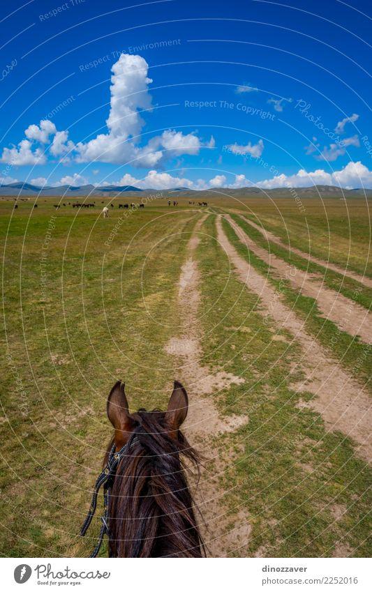 Pferderitt, First-Person-Ansicht Natur Ferien & Urlaub & Reisen Sommer Landschaft Tier Berge u. Gebirge Lifestyle Wege & Pfade Wiese Sport Gras See braun