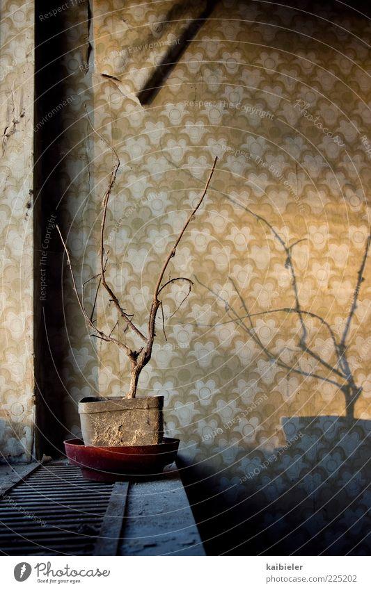 Schattenkrieger alt blau Einsamkeit gelb dunkel Wand Gebäude Mauer Wohnung Dekoration & Verzierung Häusliches Leben Trauer retro Vergänglichkeit trocken Tapete