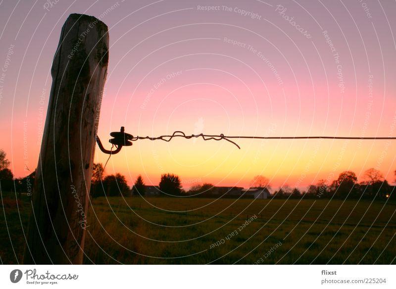 Sommerabend Baum Sommer Landschaft Holz Feld Hoffnung Sehnsucht Bauernhof Weide Schönes Wetter Wolkenloser Himmel Holzpfahl Sonnenuntergang Zaunpfahl Elektrozaun