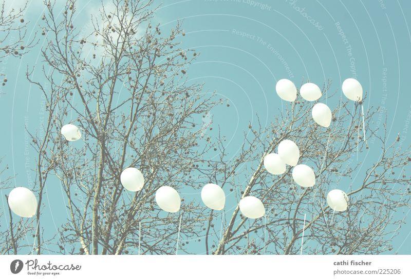 hängengeblieben Himmel Natur weiß blau Baum Sommer Freude Wolken Frühling Wind fliegen Fröhlichkeit Luftballon Romantik Dekoration & Verzierung Ast