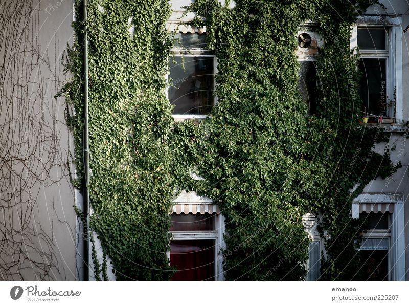 ökohaus Natur Pflanze Efeu bevölkert Haus Gebäude Architektur Garten Fenster Wachstum frisch kaputt nachhaltig grün ästhetisch kleben Belüftung Markise Fassade
