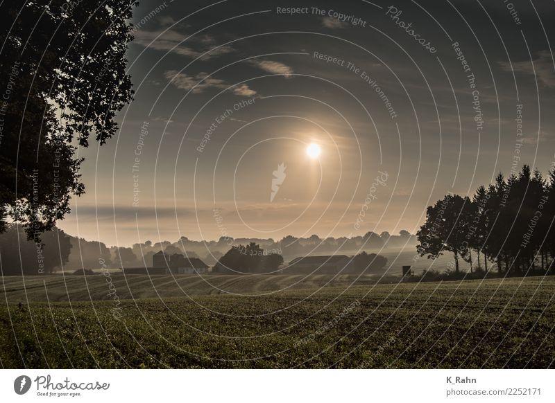 Ein Morgen in Schleswig-Holstein. ruhig Sommerurlaub Haus Garten Landwirtschaft Forstwirtschaft Natur Landschaft Himmel Sonne Sonnenaufgang Sonnenuntergang