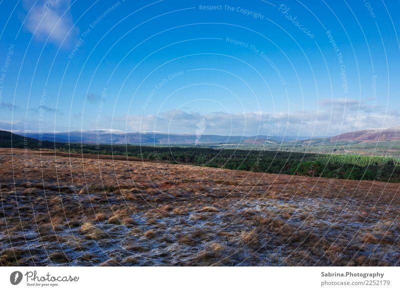 Weites Land. Umwelt Natur Landschaft Pflanze Tier Sonne Herbst Winter Schönes Wetter Schnee Gras Sträucher Wiese Hügel Berge u. Gebirge Gipfel