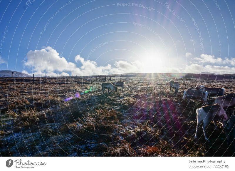 Essen fassen! Umwelt Natur Landschaft Pflanze Tier Wolkenloser Himmel Sonne Herbst Winter Schönes Wetter Schnee Wiese Berge u. Gebirge Gipfel Wildtier 4