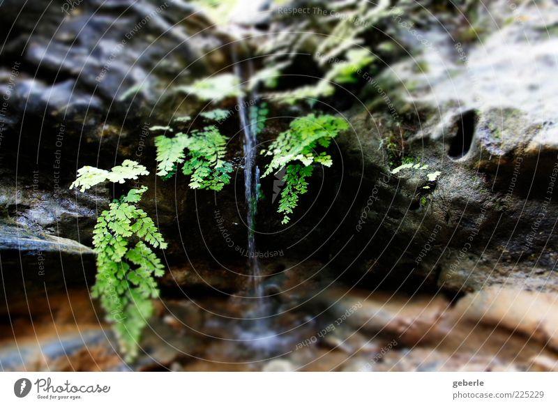 Wasser fall! Wasser grün Pflanze grau Stein klein nass Wassertropfen natürlich Bach Wasserfall Farn Geplätscher Wasserspiegelung