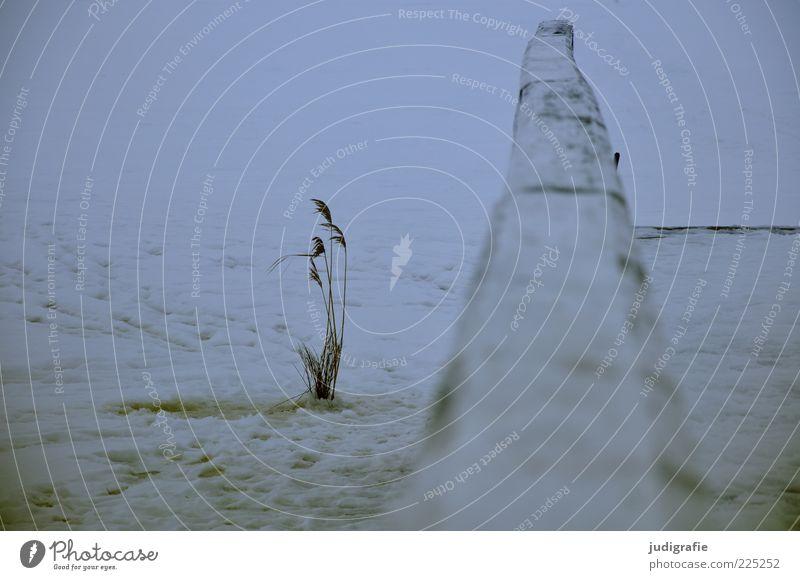 Am Bodden Umwelt Natur Pflanze Winter Eis Frost Gras Küste Seeufer kalt trist Stimmung Schilfrohr Steg Geländer weiß Farbfoto Gedeckte Farben Außenaufnahme