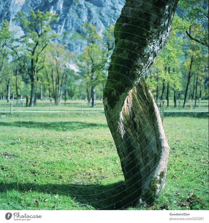 dreh dich! Natur alt Baum Pflanze Herbst Umwelt Park natürlich außergewöhnlich Baumstamm verdreht