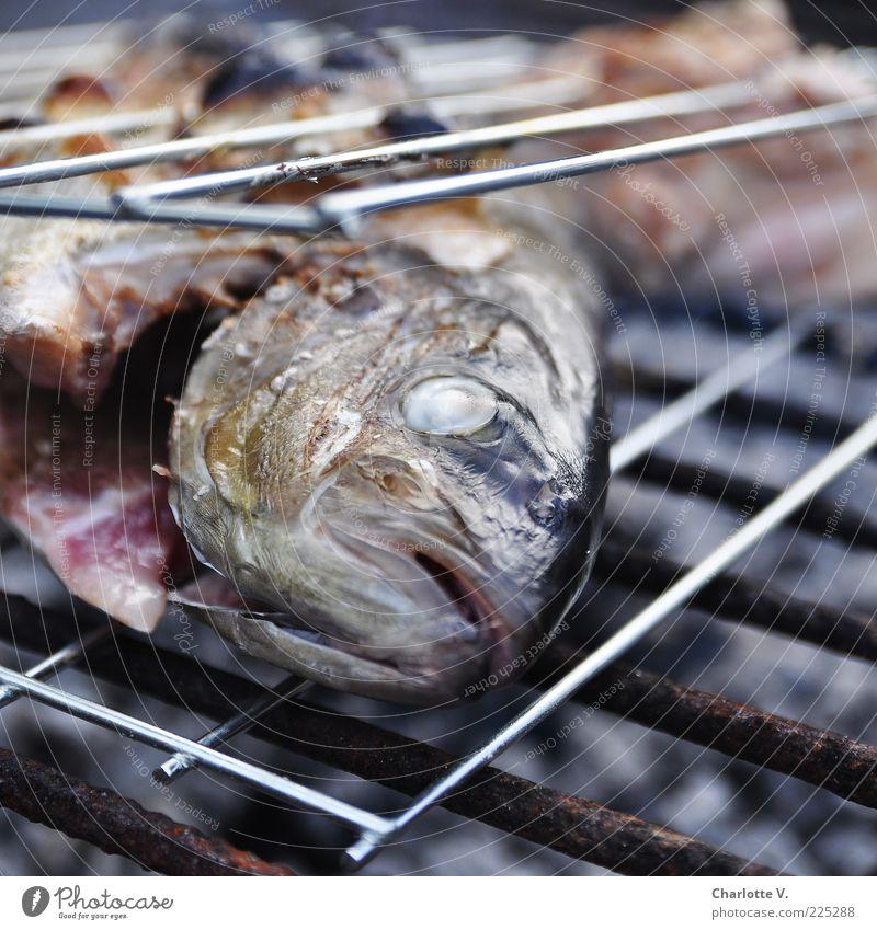 Noch ein Grillfisch Tod braun rosa gold liegen Fisch Speise Kochen & Garen & Backen heiß lecker Rost Grillen Duft silber