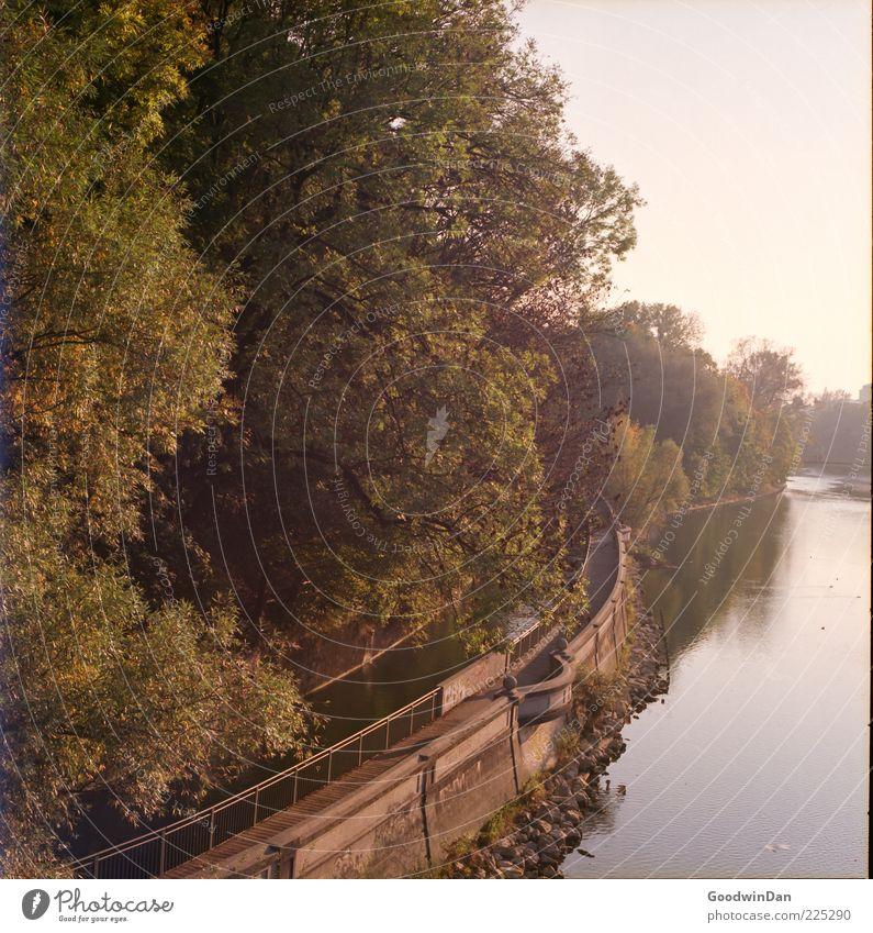 täglicher Blick Natur Wasser schön Baum Blatt Umwelt Landschaft Mauer hell Stimmung groß Beton authentisch gut Fluss Unendlichkeit
